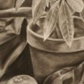 Nick Scrimenti - Vanitas Drawing