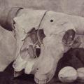 Nick Scrimenti - Bull Skull Still Life